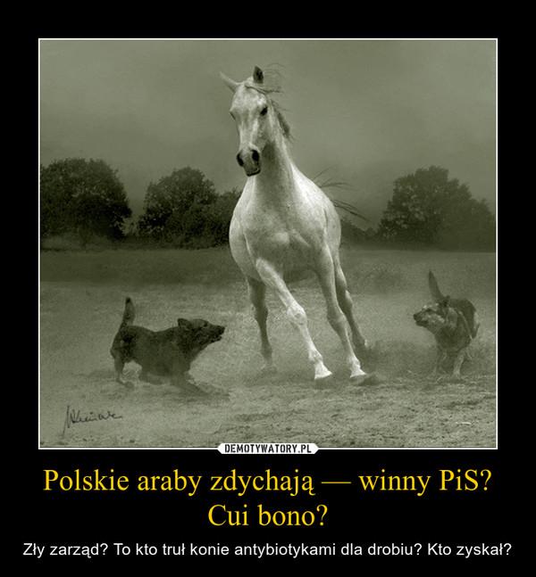 Polskie araby zdychają — winny PiS? Cui bono? – Zły zarząd? To kto truł konie antybiotykami dla drobiu? Kto zyskał?