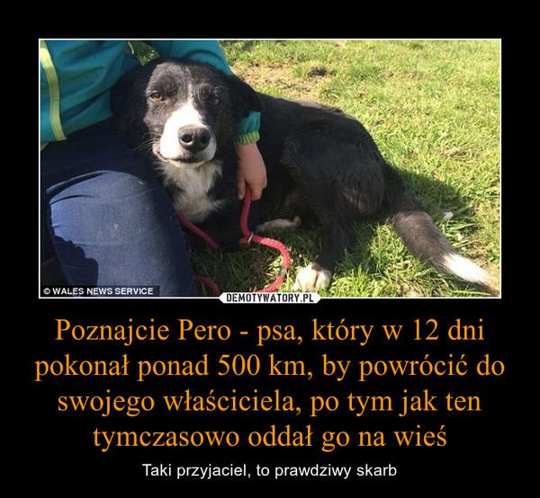 Poznajcie Pero - psa, który w 12 dni pokonał ponad 500 km, by powrócić do swojego właściciela, po tym jak ten tymczasowo oddał go na wieś – Taki przyjaciel, to prawdziwy skarb