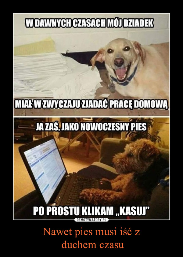 Nawet pies musi iść z duchem czasu –