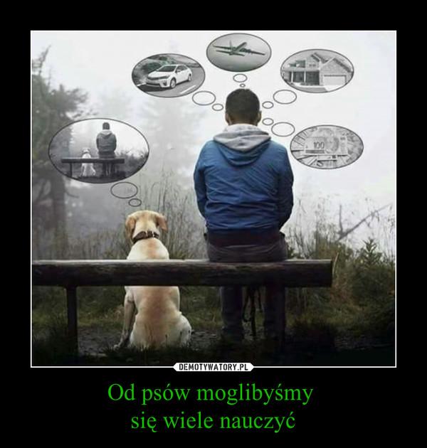 Od psów moglibyśmy się wiele nauczyć –