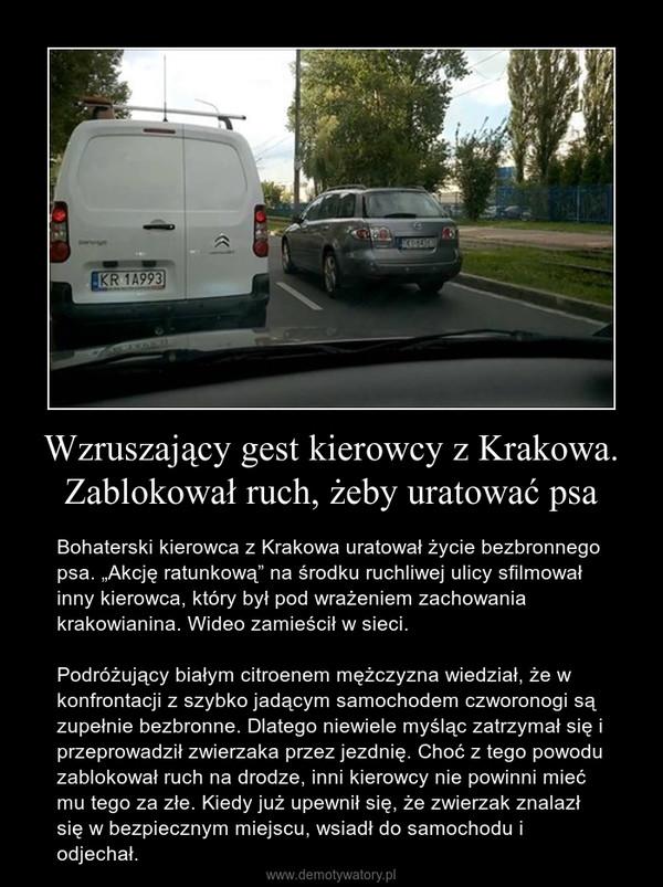 """Wzruszający gest kierowcy z Krakowa. Zablokował ruch, żeby uratować psa – Bohaterski kierowca z Krakowa uratował życie bezbronnego psa. """"Akcję ratunkową"""" na środku ruchliwej ulicy sfilmował inny kierowca, który był pod wrażeniem zachowania krakowianina. Wideo zamieścił w sieci. Podróżujący białym citroenem mężczyzna wiedział, że w konfrontacji z szybko jadącym samochodem czworonogi są zupełnie bezbronne. Dlatego niewiele myśląc zatrzymał się i przeprowadził zwierzaka przez jezdnię. Choć z tego powodu zablokował ruch na drodze, inni kierowcy nie powinni mieć mu tego za złe. Kiedy już upewnił się, że zwierzak znalazł się w bezpiecznym miejscu, wsiadł do samochodu i odjechał."""
