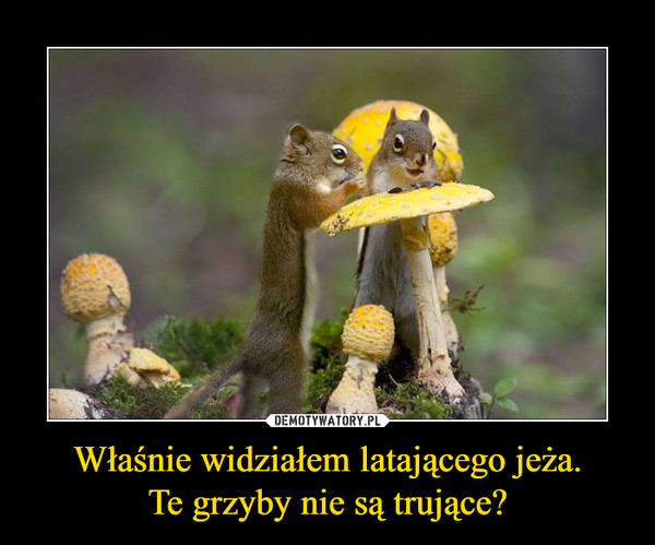 Właśnie widziałem latającego jeża.Te grzyby nie są trujące? –
