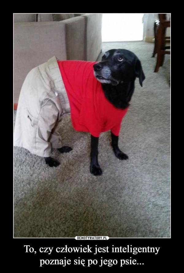 To, czy człowiek jest inteligentnypoznaje się po jego psie... –