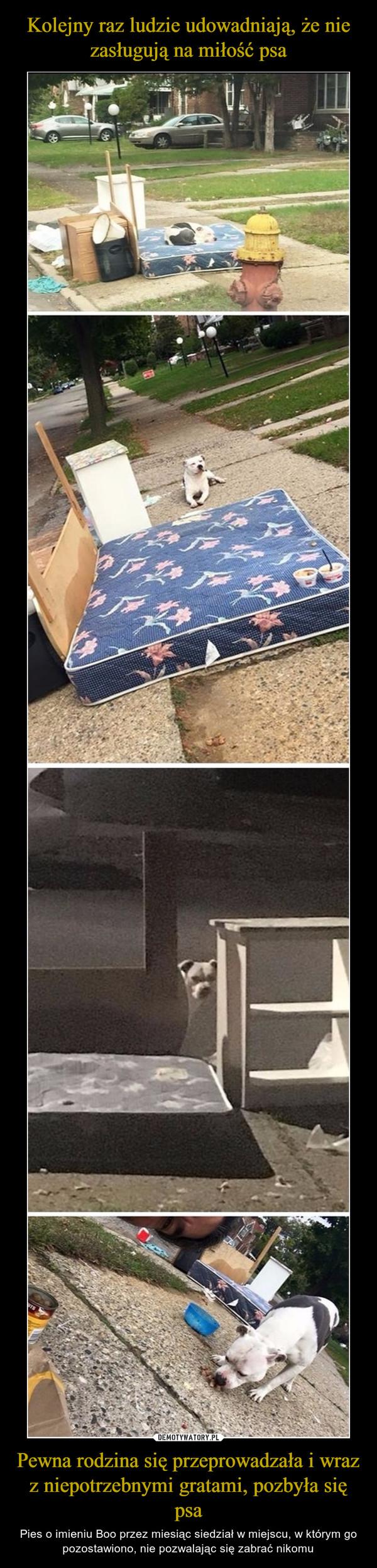 Pewna rodzina się przeprowadzała i wraz z niepotrzebnymi gratami, pozbyła się psa – Pies o imieniu Boo przez miesiąc siedział w miejscu, w którym go pozostawiono, nie pozwalając się zabrać nikomu