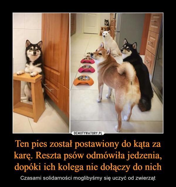 Ten pies został postawiony do kąta za karę. Reszta psów odmówiła jedzenia, dopóki ich kolega nie dołączy do nich – Czasami solidarności moglibyśmy się uczyć od zwierząt