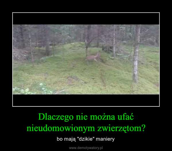 """Dlaczego nie można ufać nieudomowionym zwierzętom? – bo mają """"dzikie"""" maniery"""