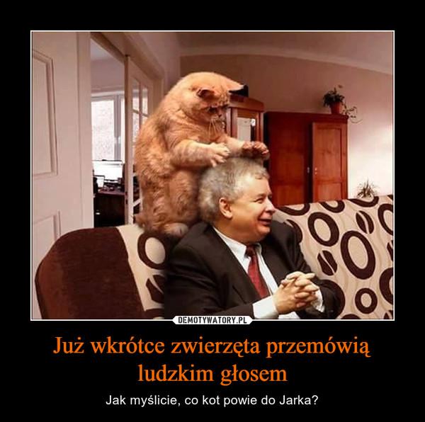 Już wkrótce zwierzęta przemówią ludzkim głosem – Jak myślicie, co kot powie do Jarka?