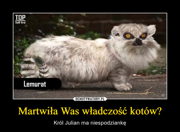 Martwiła Was władczość kotów? – Król Julian ma niespodziankę