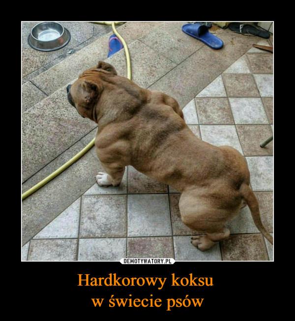 Hardkorowy koksu w świecie psów –