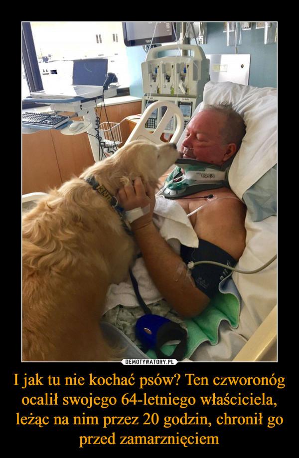 I jak tu nie kochać psów? Ten czworonóg ocalił swojego 64-letniego właściciela, leżąc na nim przez 20 godzin, chronił go przed zamarznięciem –
