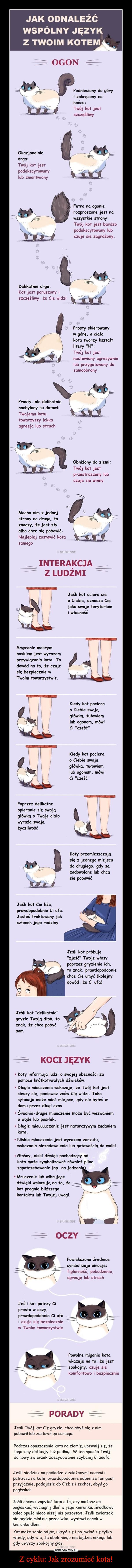 Z cyklu: Jak zrozumieć kota! –