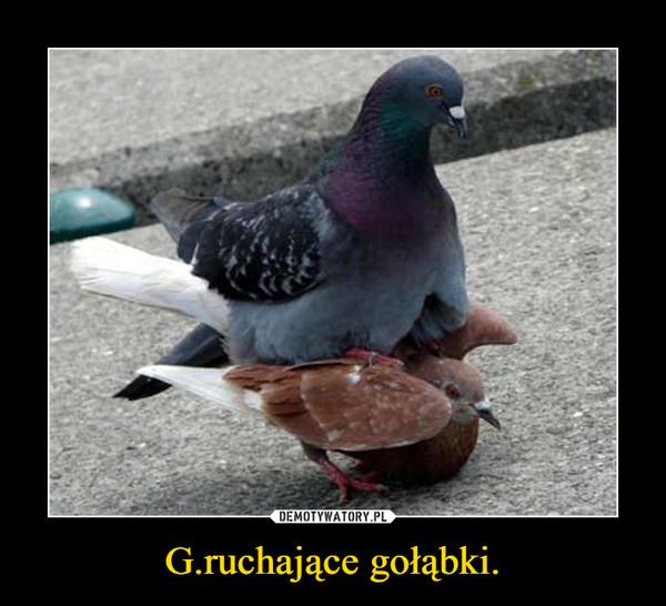 G.ruchające gołąbki. –