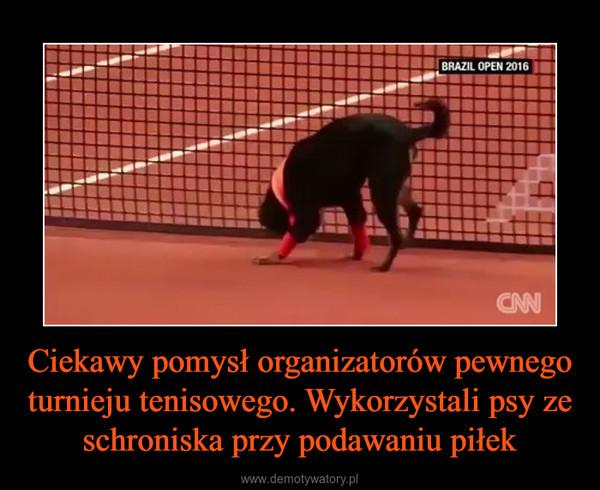 Ciekawy pomysł organizatorów pewnego turnieju tenisowego. Wykorzystali psy ze schroniska przy podawaniu piłek –