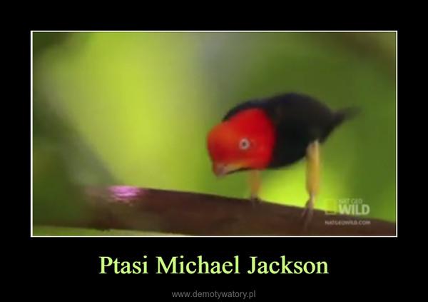 Ptasi Michael Jackson –