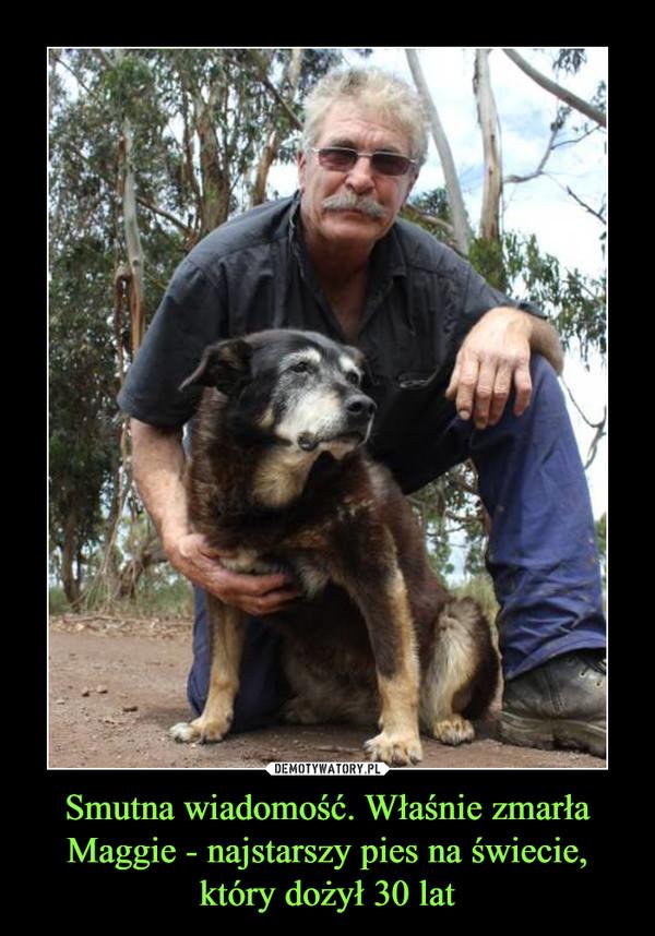Smutna wiadomość. Właśnie zmarła Maggie - najstarszy pies na świecie, który dożył 30 lat –