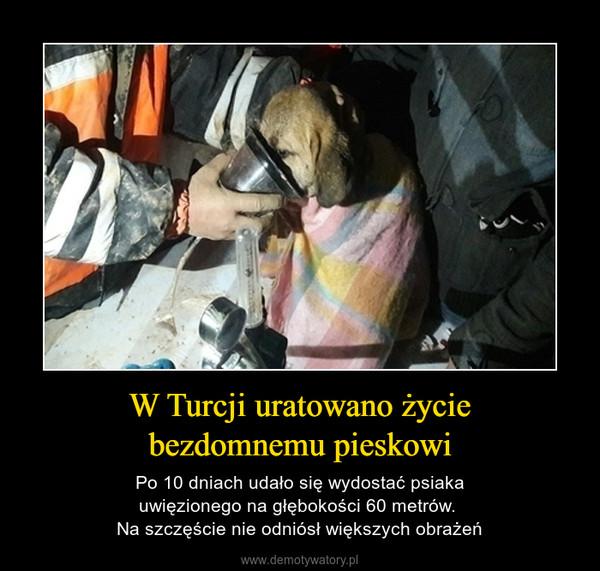 W Turcji uratowano życiebezdomnemu pieskowi – Po 10 dniach udało się wydostać psiakauwięzionego na głębokości 60 metrów. Na szczęście nie odniósł większych obrażeń