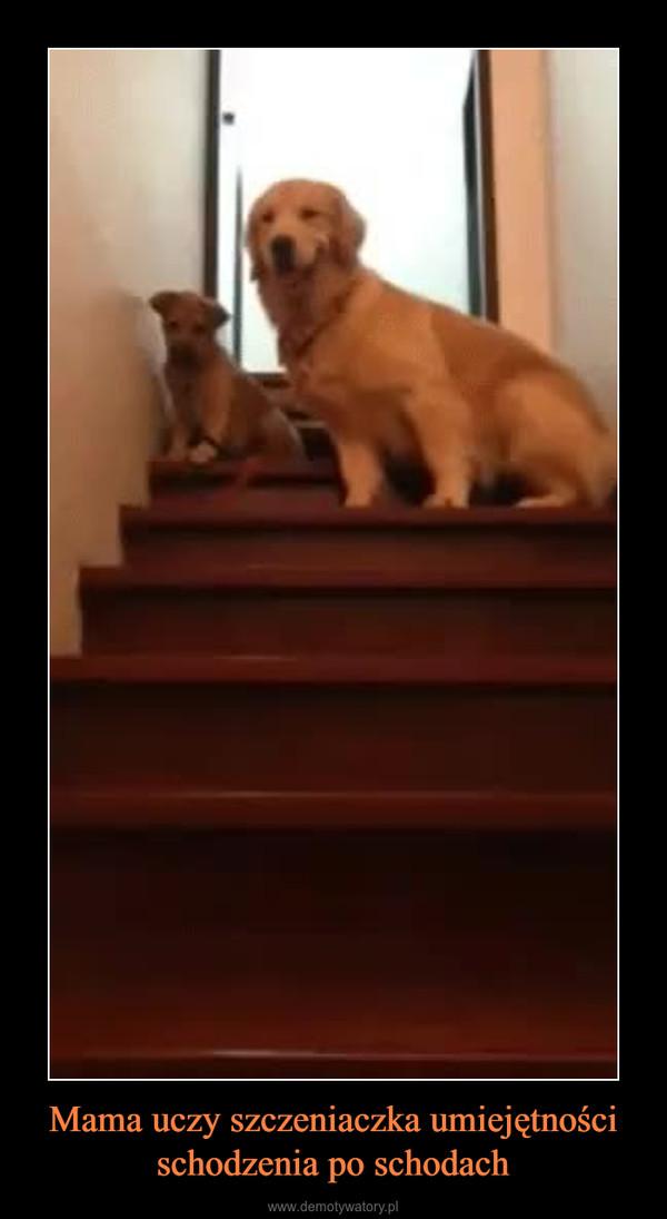 Mama uczy szczeniaczka umiejętności schodzenia po schodach –