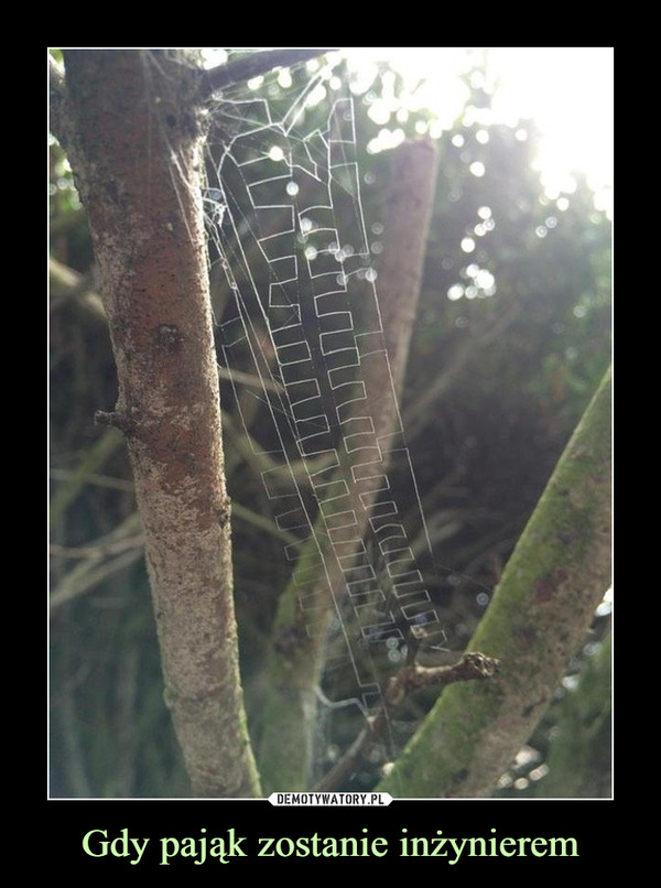 Gdy pająk zostanie inżynierem –