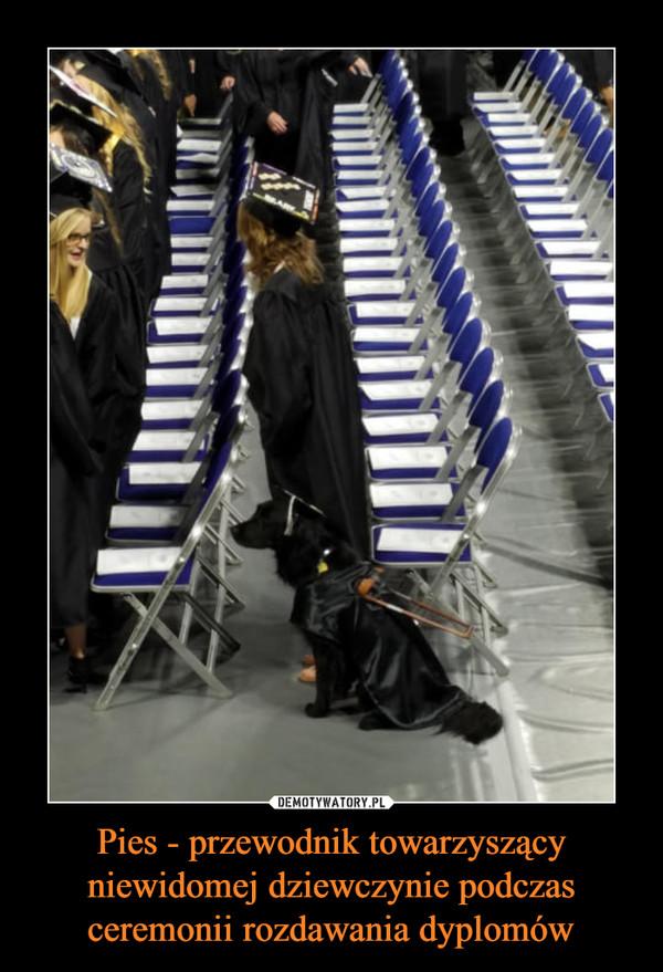 Pies - przewodnik towarzyszący niewidomej dziewczynie podczas ceremonii rozdawania dyplomów –