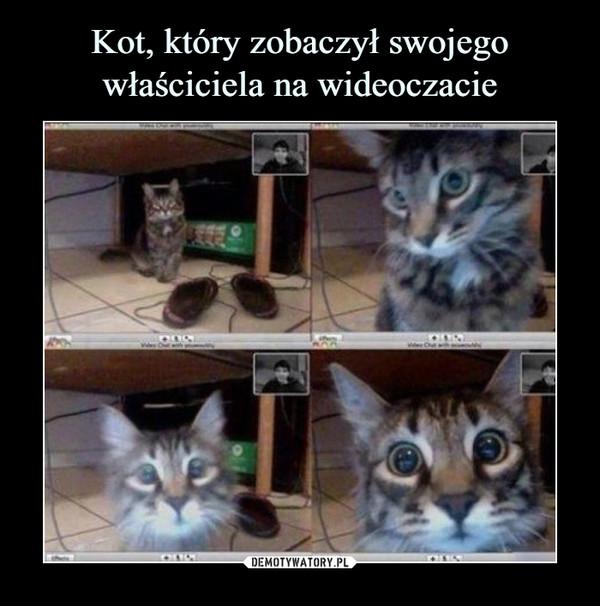 Kot, który zobaczył swojego właściciela na wideoczacie