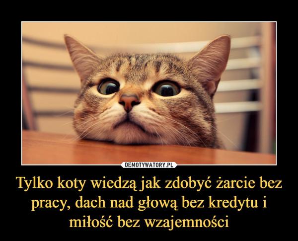 Tylko koty wiedzą jak zdobyć żarcie bez pracy, dach nad głową bez kredytu i miłość bez wzajemności –
