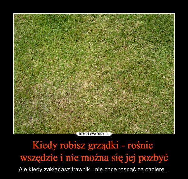 Kiedy robisz grządki - rośnie wszędzie i nie można się jej pozbyć – Ale kiedy zakładasz trawnik - nie chce rosnąć za cholerę...