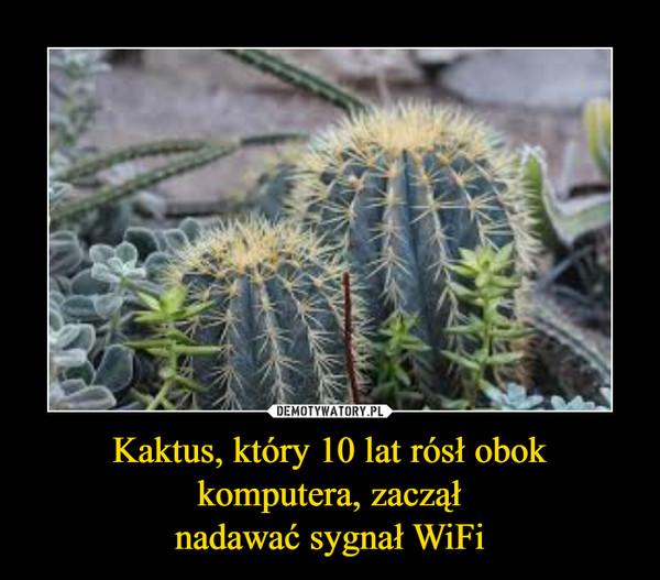 Kaktus, który 10 lat rósł obok komputera, zacząłnadawać sygnał WiFi –