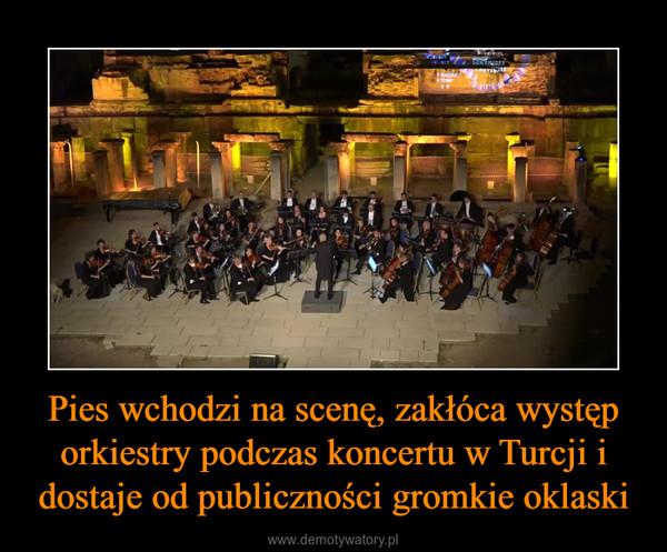 Pies wchodzi na scenę, zakłóca występ orkiestry podczas koncertu w Turcji i dostaje od publiczności gromkie oklaski –