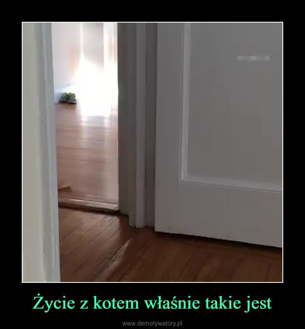 Życie z kotem właśnie takie jest –