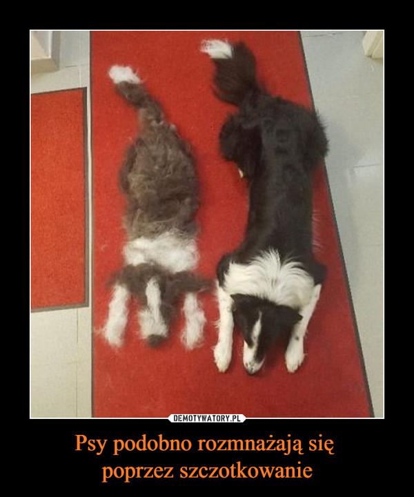 Psy podobno rozmnażają się poprzez szczotkowanie –