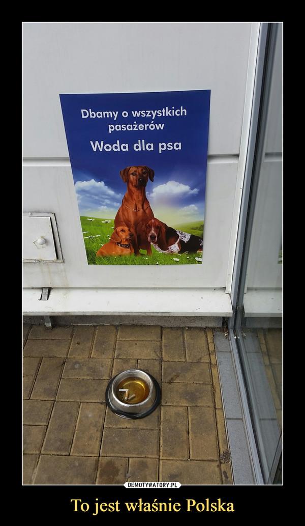 To jest właśnie Polska –  Dbamy o wszystkich pasażerówWoda dla psa
