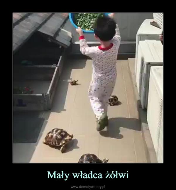 Mały władca żółwi –