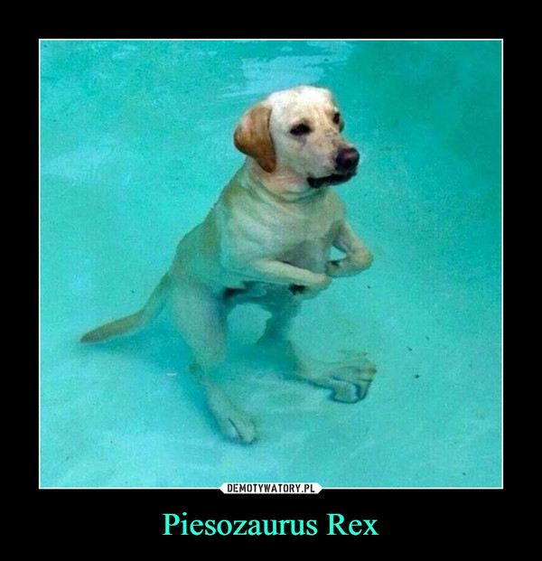 Piesozaurus Rex –