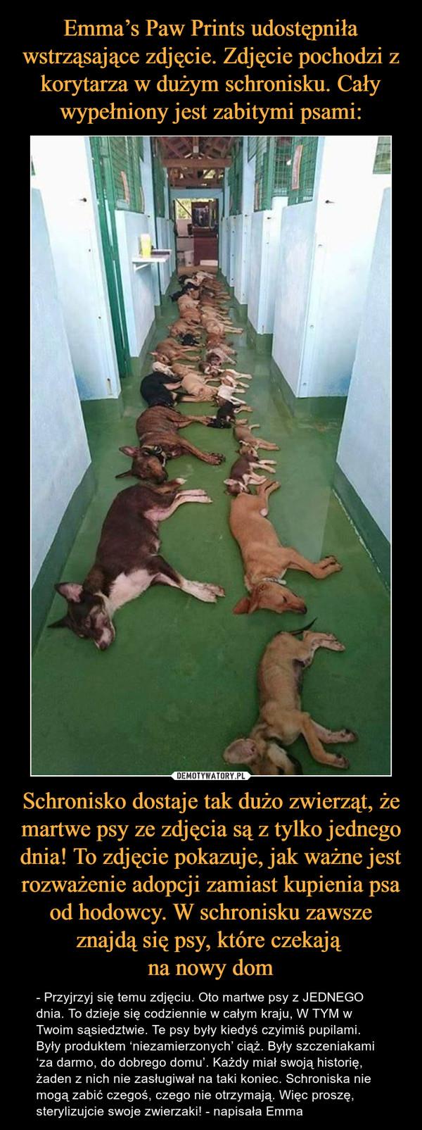 Schronisko dostaje tak dużo zwierząt, że martwe psy ze zdjęcia są z tylko jednego dnia! To zdjęcie pokazuje, jak ważne jest rozważenie adopcji zamiast kupienia psa od hodowcy. W schronisku zawsze znajdą się psy, które czekają na nowy dom – - Przyjrzyj się temu zdjęciu. Oto martwe psy z JEDNEGO dnia. To dzieje się codziennie w całym kraju, W TYM w Twoim sąsiedztwie. Te psy były kiedyś czyimiś pupilami. Były produktem 'niezamierzonych' ciąż. Były szczeniakami 'za darmo, do dobrego domu'. Każdy miał swoją historię, żaden z nich nie zasługiwał na taki koniec. Schroniska nie mogą zabić czegoś, czego nie otrzymają. Więc proszę, sterylizujcie swoje zwierzaki! - napisała Emma