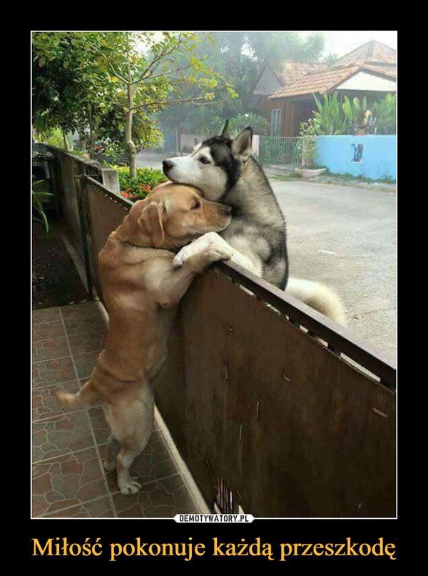 Miłość pokonuje każdą przeszkodę –