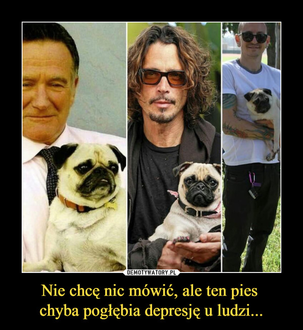 Nie chcę nic mówić, ale ten pies chyba pogłębia depresję u ludzi... –