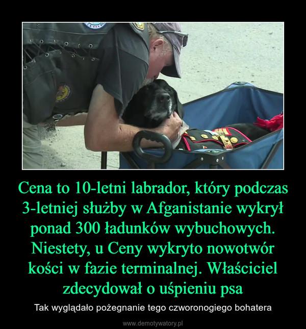 Cena to 10-letni labrador, który podczas 3-letniej służby w Afganistanie wykrył ponad 300 ładunków wybuchowych. Niestety, u Ceny wykryto nowotwór kości w fazie terminalnej. Właściciel zdecydował o uśpieniu psa – Tak wyglądało pożegnanie tego czworonogiego bohatera
