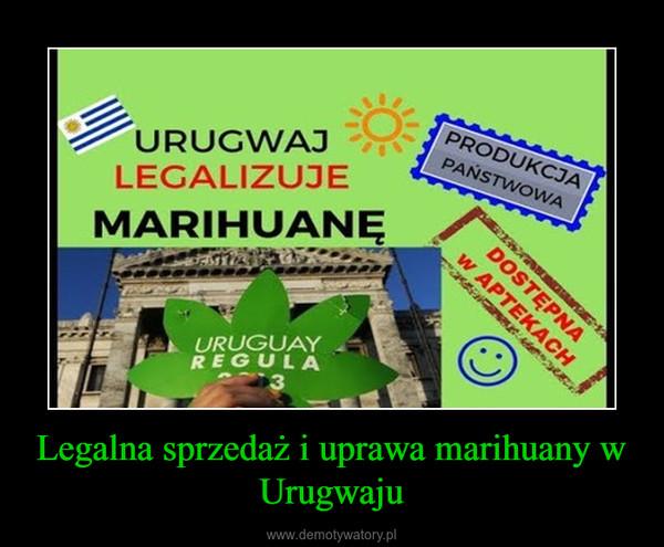 Legalna sprzedaż i uprawa marihuany w Urugwaju –