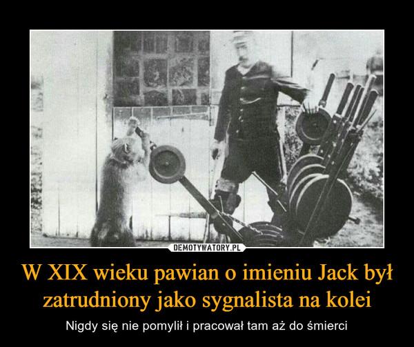 W XIX wieku pawian o imieniu Jack był zatrudniony jako sygnalista na kolei – Nigdy się nie pomylił i pracował tam aż do śmierci