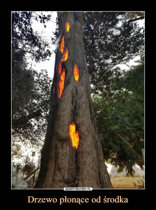Drzewo płonące od środka –