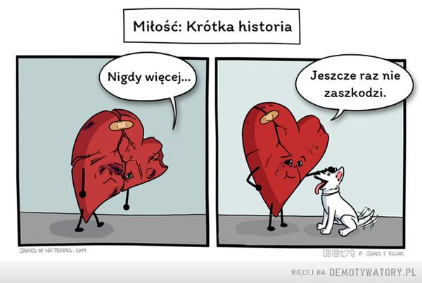 Krótka historia miłości –