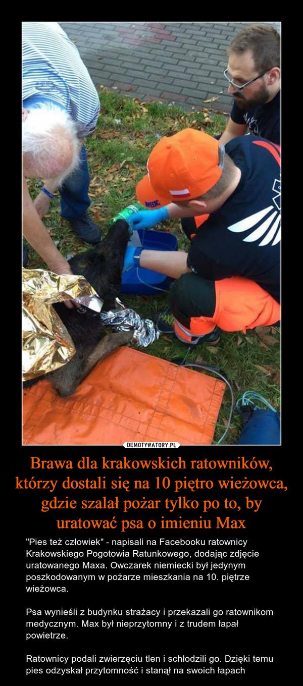 """Brawa dla krakowskich ratowników, którzy dostali się na 10 piętro wieżowca, gdzie szalał pożar tylko po to, by uratować psa o imieniu Max – """"Pies też człowiek"""" - napisali na Facebooku ratownicy Krakowskiego Pogotowia Ratunkowego, dodając zdjęcie uratowanego Maxa. Owczarek niemiecki był jedynym poszkodowanym w pożarze mieszkania na 10. piętrze wieżowca.Psa wynieśli z budynku strażacy i przekazali go ratownikom medycznym. Max był nieprzytomny i z trudem łapał powietrze.Ratownicy podali zwierzęciu tlen i schłodzili go. Dzięki temu pies odzyskał przytomność i stanął na swoich łapach"""