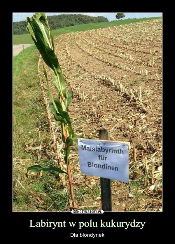 Labirynt w polu kukurydzy – Dla blondynek