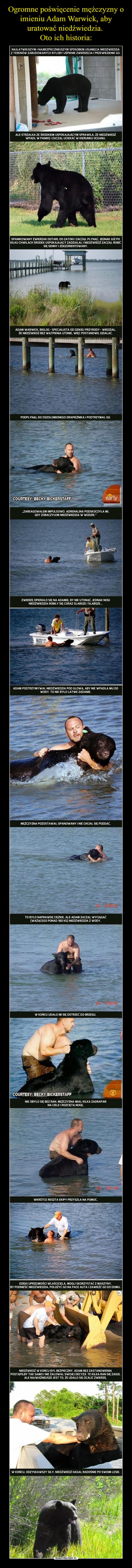 –  Najłatwiejszym i najbezpieczniejszym sposobem usunięcia niedźwiedzia z terenów zabudowanych byłoby uśpienie zwierzęcia i przewiezienie go ale strzałka ze środkiem usypiającym sprawiła, że niedźwiedź wpadł w panikę i zaczął uciekać w kierunku oceanu spanikowany zwierzak dotarł do zatoki i zaczął płynąć , jednak już po kilku chwilach środek usypiający zadziałał i niedźwiedź zaczął robić się senny i zdezorientowany. Adam warwick , biolog - specjalista od dzikiej przyrody - wiedział, że niedźwiedź bez wątpienia utonie, więc postanowił działać. podpłynął do oszołomionego drapieżnika i podtrzymał go. zareagowałem impulsywnie. Adrenalina podskoczyła mi, gdy zobaczyłem niedźwiedzia w wodzie. zwierzę oparło się na adamie, by nie utonąć, jednak nogi niedźwiedzia robiły sie coraz słabsze i słabsze. Adam podtrzymywał niedźwiedzia pod głową, aby nie wpadła mu do wody,. To nie było łatwe zadanie. Mężczyzna pozostawał opanowany i nie chciał się poddać. To było naprawdę ciężkie, ale adam zaczął wyciągać (ważącego ponad 180kg) niedźwiedzia z wody.w końcu udało im się dotrzeć do brzegu. Nie obyło sie bez ran mężczyzna miał kilka zadrapań na ciele i rozciętą nogę. wkrótce ruszyła reszta ekipy im na pomoc.  W końcu odzyskawszy siły niedźwiedź hasał radośnie po swoim lesie