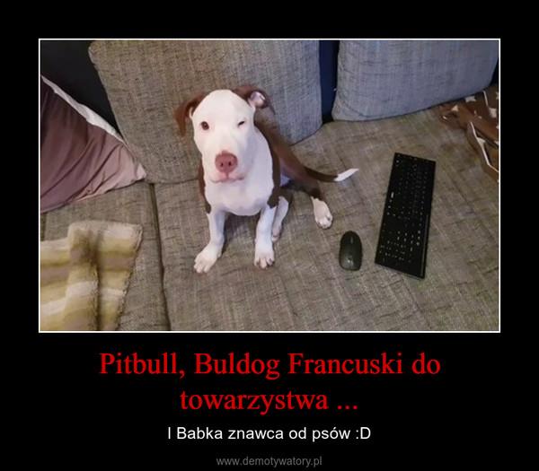 Pitbull, Buldog Francuski do towarzystwa ... – I Babka znawca od psów :D