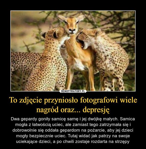 To zdjęcie przyniosło fotografowi wiele nagród oraz... depresję – Dwa gepardy goniły samicę sarnę i jej dwójkę małych. Samica mogła z łatwością uciec, ale zamiast tego zatrzymała się i dobrowolnie się oddała gepardom na pożarcie, aby jej dzieci mogły bezpiecznie uciec. Tutaj widać jak patrzy na swoje uciekające dzieci, a po chwili zostaje rozdarta na strzępy