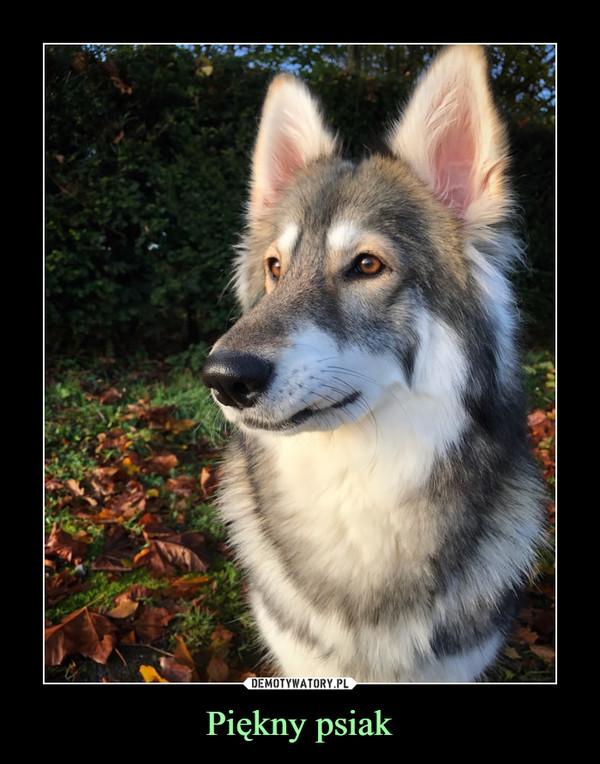 Piękny psiak –