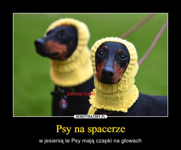Psy na spacerze – w jesienią te Psy mają czapki na głowach