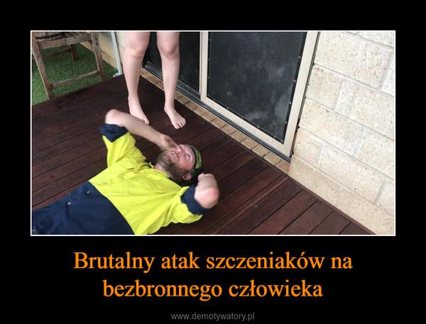 Brutalny atak szczeniaków na bezbronnego człowieka –