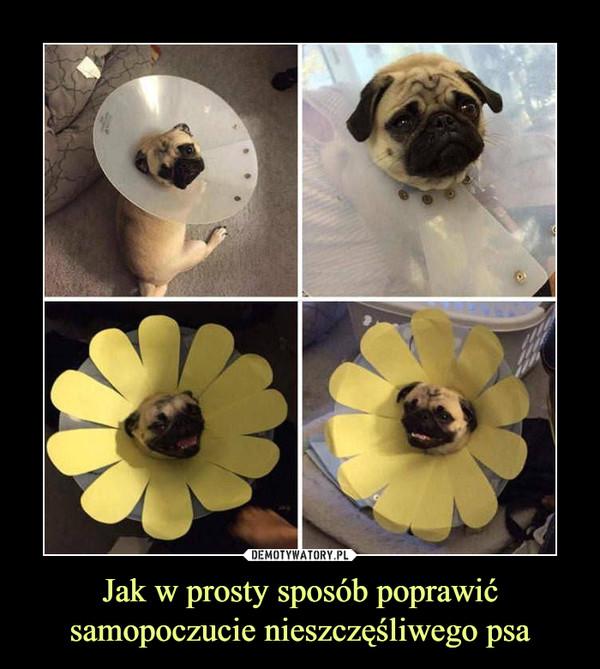 Jak w prosty sposób poprawić samopoczucie nieszczęśliwego psa –
